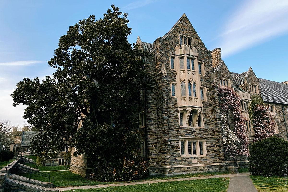 Принстонский университет - растительность на стенах