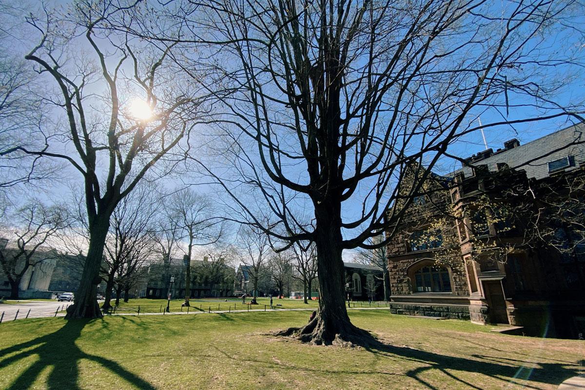 Принстонский университет - газон