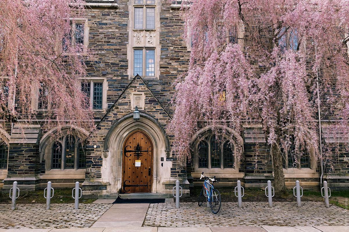 Принстонский университет - сакура
