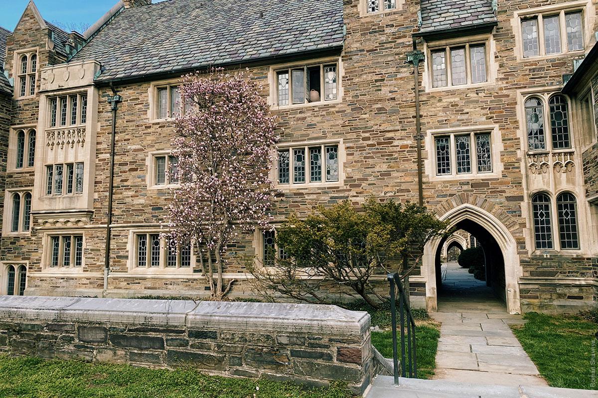 Принстонский университет - окна