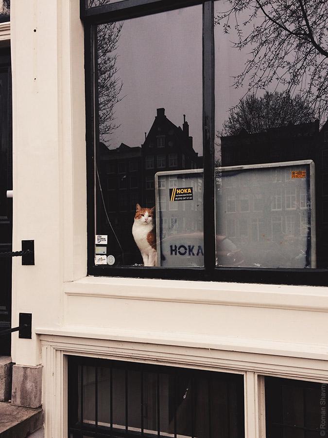 Коты в Амстердаме