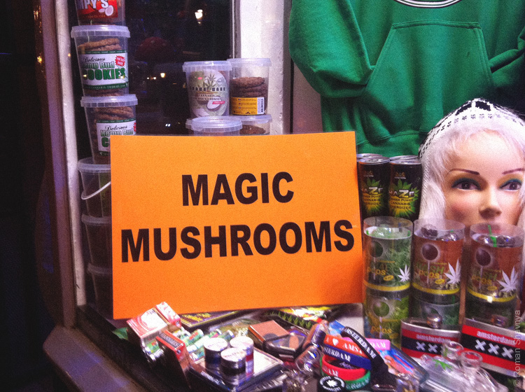 Трава и грибы в Амстердаме
