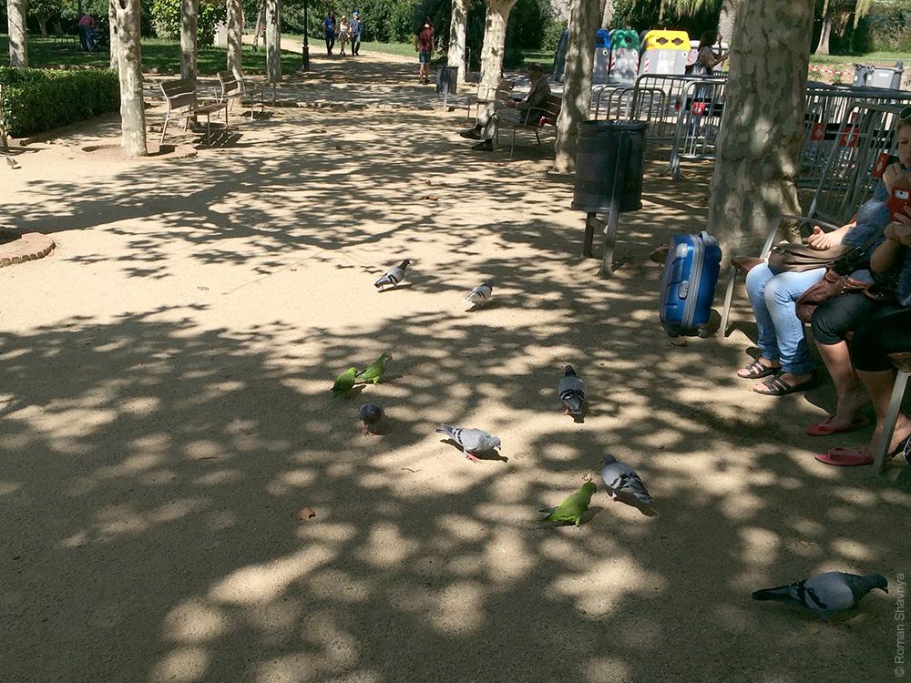 Попугаи в Барселоне