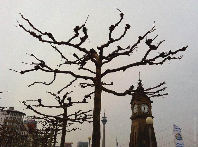Необычные деревья в Дюссельдорфе